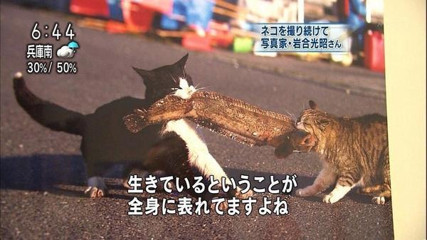 ウツボ「解せぬ」 pic.twitter.com/mXusEk4VQ7