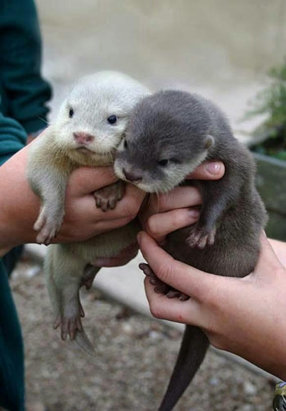 look at these little guys