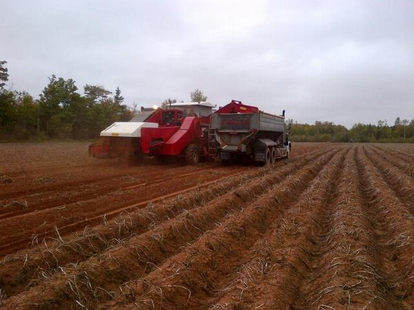 It's go time with #peipotatoes #harvest2014 Safe and plentiful harvest to all my fellow potato farmers http://t.co/3IIjYRh3Pp