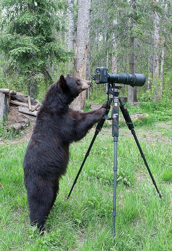 クマカメラマンさん、スクープは見つかりましたか? https://t.co/JzLqukG3OM