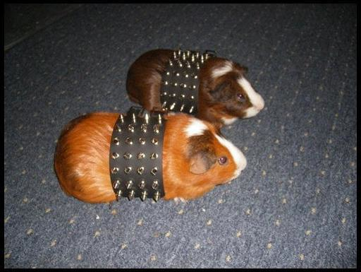 when you and your main girl go out glam as heck http://t.co/5jIBrl0GZi