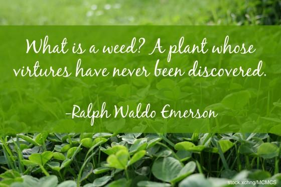 Image result for what is a weed a plant whose virtues have never been discovered