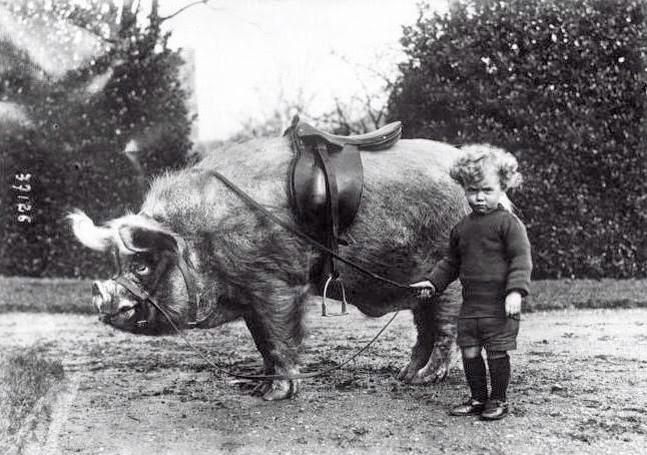 RT @SeanDoylezzz: Walt's first day at school. Early 1950s. http://t.co/g486mnVVJ5