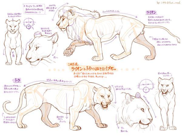 ライオンとトラの違いメモ。