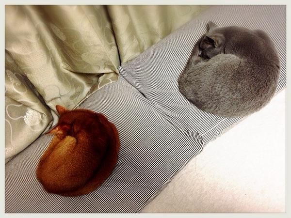 彼らは、私に枕を渡す気はないようだ……( ̄ー ̄) #kananeko pic.twitter.com/UN4SADO3vZ
