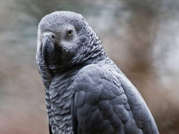 イギリスのオウム。4年失踪、戻ってきたらスペイン語話す➡︎☝️ British parrot missing for four years returns speaking Spanish http://t.co/69wtMOaJz1 http://t.co/7pLMzR6b8N