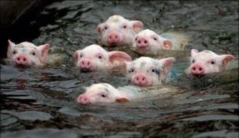 1週間の楽しみが終わり、豚リスナーたちは来週まで我慢の時を過ごす… #洲崎西