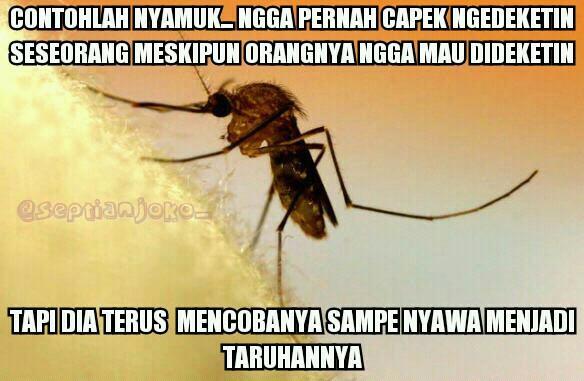 Ternyata Nyamuk Itu Ada Manfaatnya - AnekaNews.net