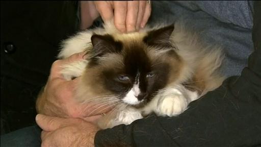 Itv News On Twitter Cat Price Sale Family Pet Tiffany