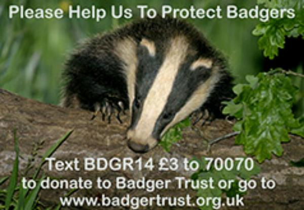 This National Badger Day, help us protect badgers by donating to the @BadgerTrust by text. #nationalbadgerday http://t.co/fMZ7dNtaSf