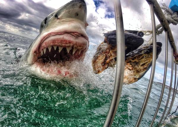 GoPro On Twitter Photo Of The Day Amazing Image From Amanda Brewer Who Is Working To Promote Shark Conservation In South Africa Tco Xt368fyaOg