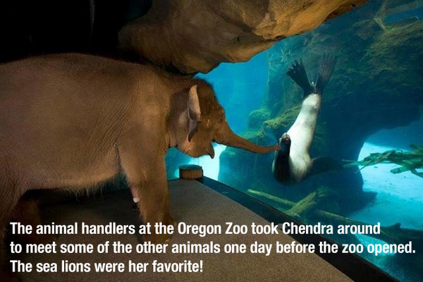 Just making the rounds,s saying hello. Amazing!  RT @BBAnimals: http://t.co/XSY9I1VIwE
