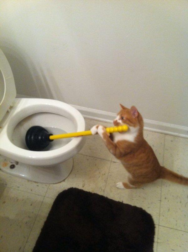 CAT:UNBLOCK