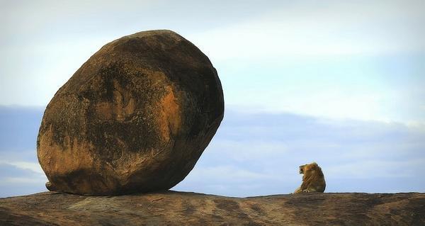 золотая черепаха лучшие фотографии