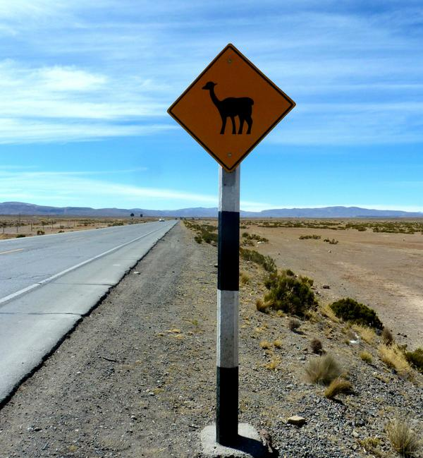 Vorsicht an der nächsten Kreuzung! http://t.co/v4WV0UTUV9 #Schilder #fun #travel #reisen #peru #lama #alpaca http://t.co/glhhWpi1qp