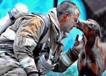 Una perra embarazada besa a un bombero tras salvar su vida y las vidas de sus bebés en un incendio en casa. http://t.co/YgO5V6pOPj