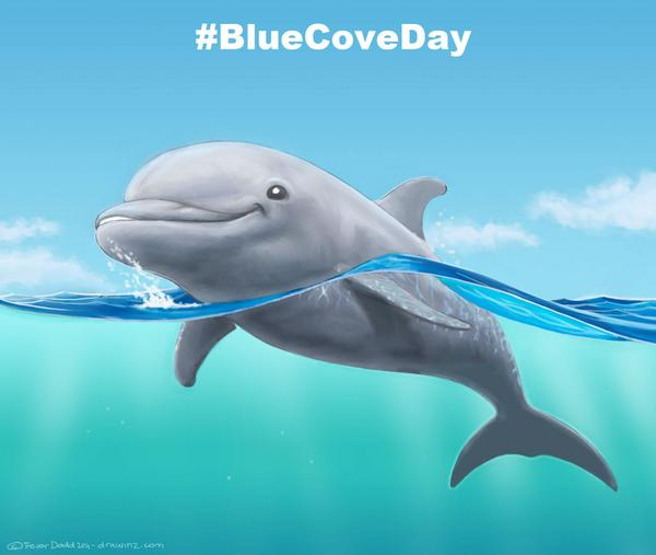 Dolphin Paint Color