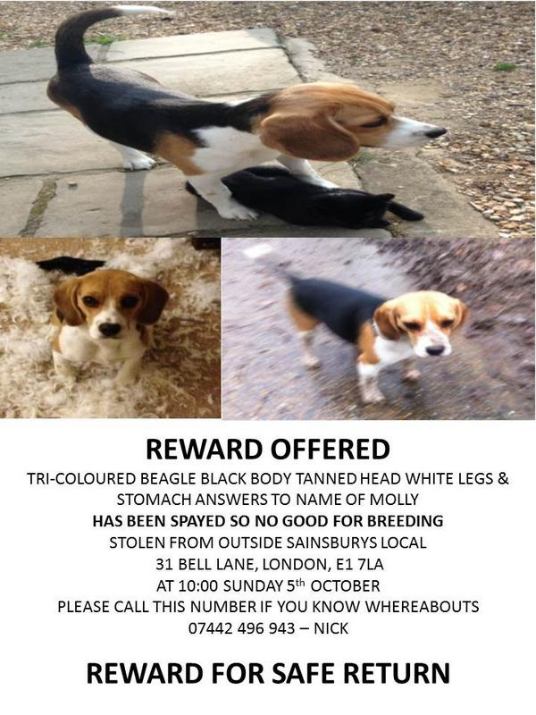 Please help my mate find his dog Molly,she was his world & someone has stolen her.Thank u. @rickygervais @SimonCowell http://t.co/gnrVBuAeii