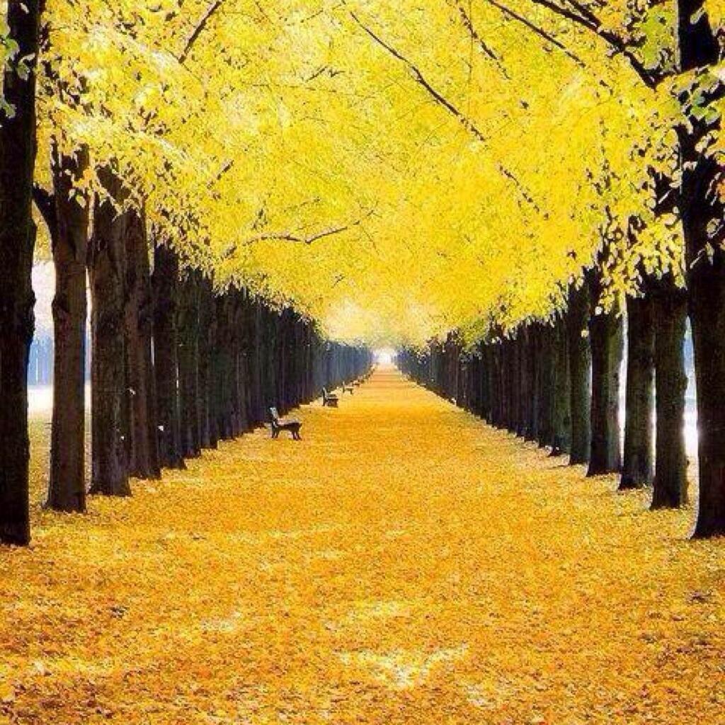 automne  Bzalr6XIcAA7C5c