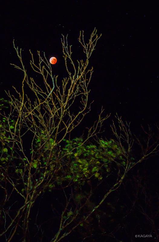 皆既月食最大の頃に撮影。赤銅色の月がうかぶ幻想的な光景。 pic.twitter.com/B4DcutlmaX