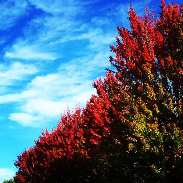 Fall is the best! #nwpdx http://t.co/XreaVY3GdU