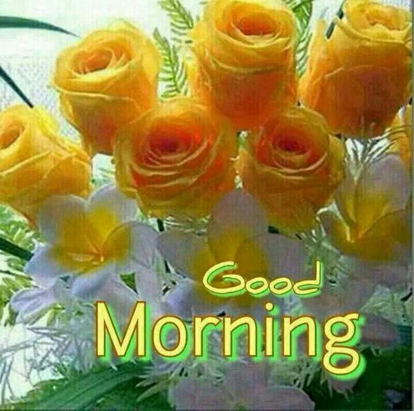 Kotha Ravi Kumar On Twitter Good Morning Friends And Family