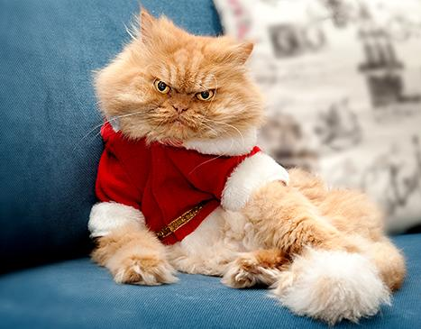 Look out Grumpy Cat... Garfi is our newest angry kitty obsession! http://t.co/qZenuORuoC http://t.co/mJTMzfQ0CG