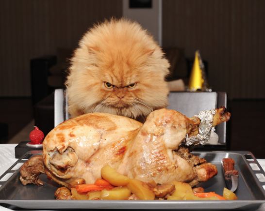 Meet Garfi, The Angriest Cat On The Internet: http://t.co/rLwWZMq9x6 #Need2Know #funny #cute #silly http://t.co/xY3cc5NROE