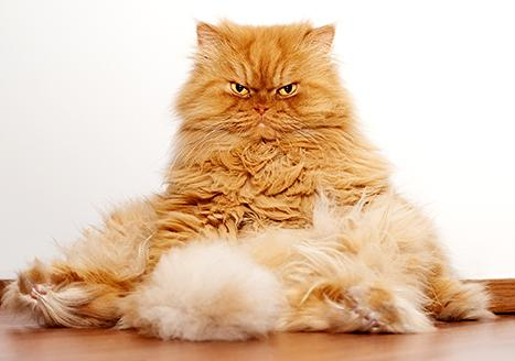 Grumpy Cat has some competition! Meet Garfi: http://t.co/KOh5eewWzA http://t.co/sMcDlMXbCR