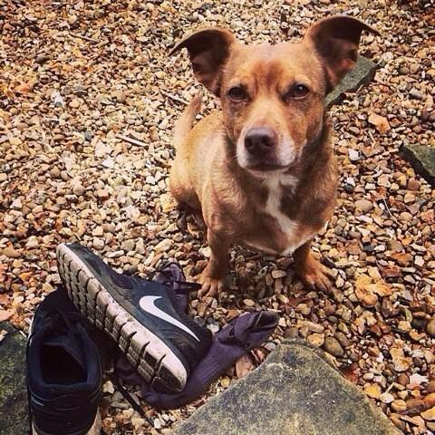 My friend @lornabancroft has lost her dog Dennis nr Wilmslow last night pls RT and contact her if you see him http://t.co/twniZtSvTi