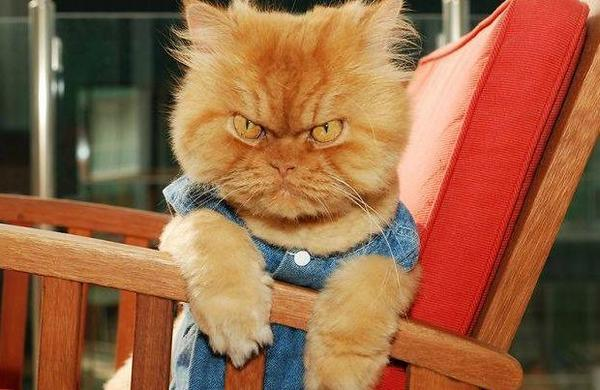 Meet 🐱 Garfi: The Angriest #Cat on the Internet http://t.co/yIRdcsMnQE  #news #media #pets http://t.co/Zv7gWI3L4e