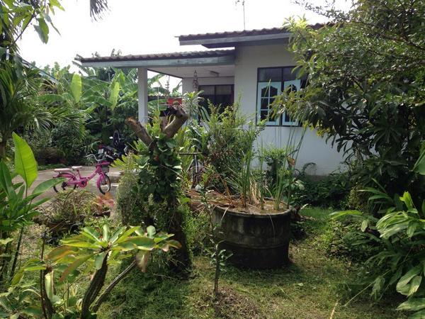สนามหน้าบ้านกลายเป็นป่าไปแล้ว (@ Leem Home (Zombies06 Safe House)) https://www.swarmapp.com/c/1EwaxfM3eNwpic.twitter.com/yczbnEeZLI