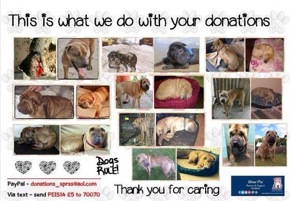We need $625 to reach goal for @SharPeiRSS Shar Pei Rescue http://t.co/GOqX3CP1rq  Let's push & try to reach #NCHG http://t.co/qpNtLCF3vB