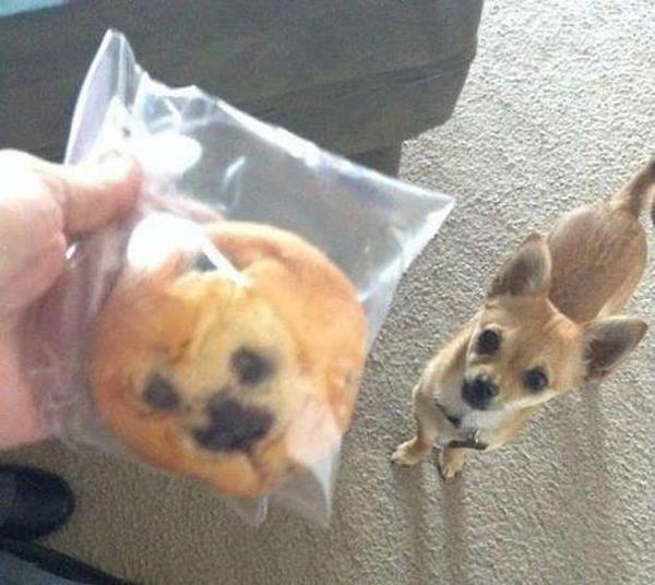 Quelle ressemblance ! #demotivateur #chien #cookies http://t.co/x7qXYk1IEE