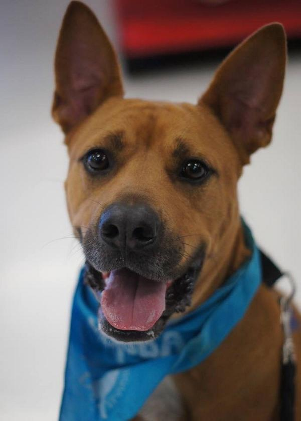 Adopt Thor Planned Pethood, Inc. : Dogs : Available Dogs http://t.co/w1myil3Y45 via @sharethis http://t.co/4I7PcK2UvY
