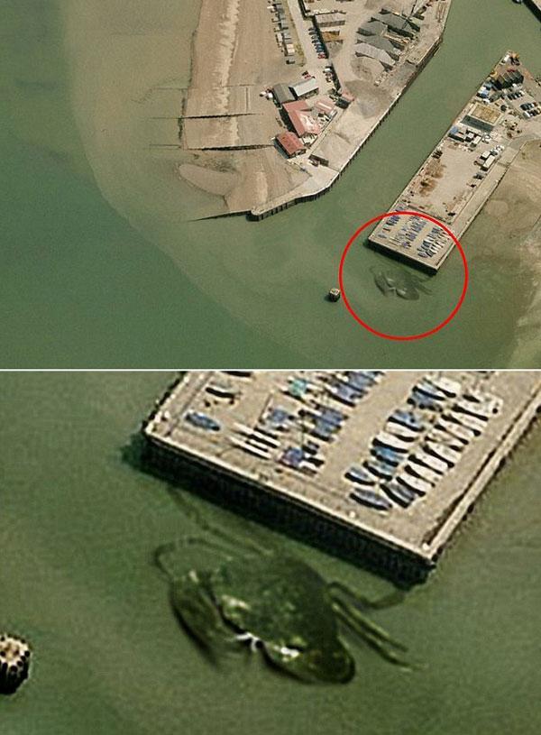 영국서 15m 거대 '대왕 게' 포착 http://t.co/zuPBywZE0o http://t.co/CYzZKE5Vad