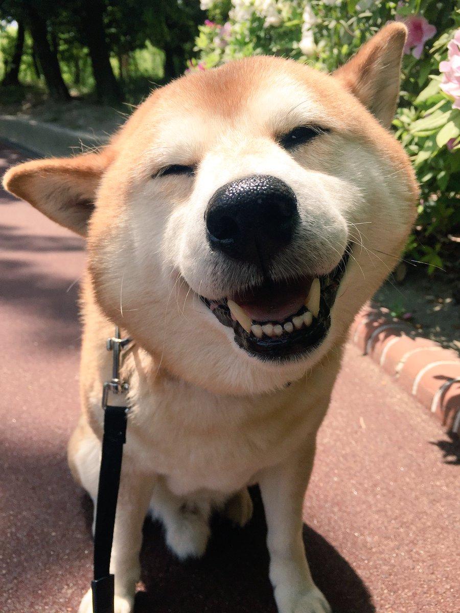 このあと病院に連れていかれることを知らない笑顔と、帰り道がどうやら病院方向だと気付いた時。 pic.twitter.com/3SaZENWlMQ