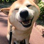 表情豊かな犬w何も知らない時の笑顔と病院に行くとわかった時の違い!