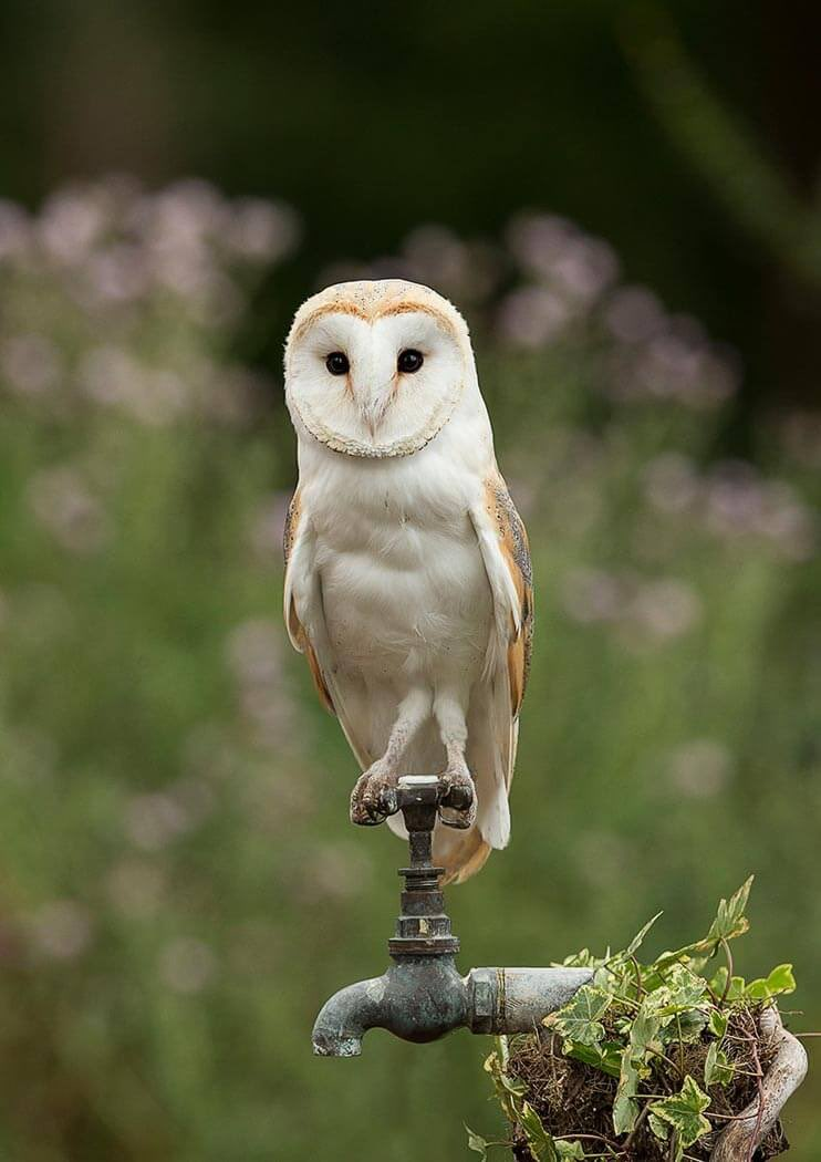 Bird Facts On Twitter Fact A Group Of Owls Is Often Referred To