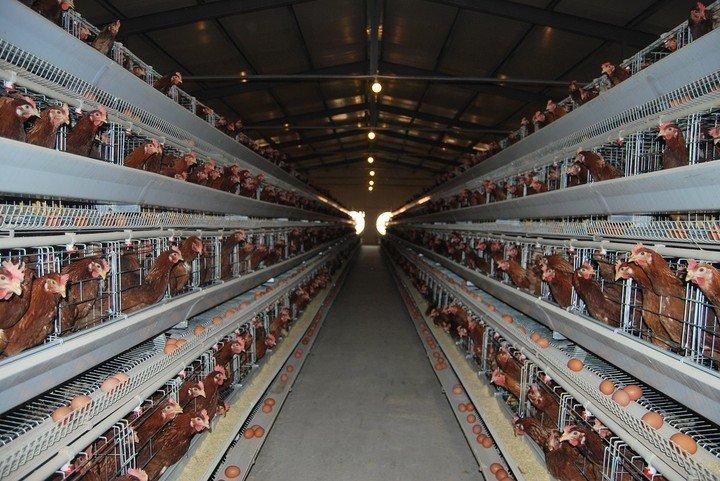 Αποτέλεσμα εικόνας για factory farming
