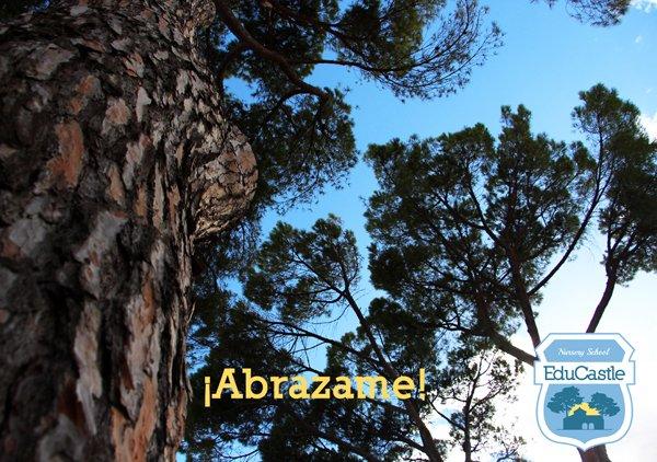 Educastle On Twitter Abrazar A Un árbol Sentir Naturaleza
