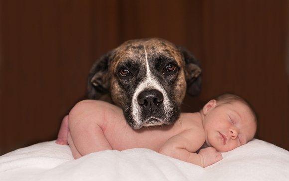 Altro tabù sfatato: cani e gatti riducono rischio di allergie infantili e obesità