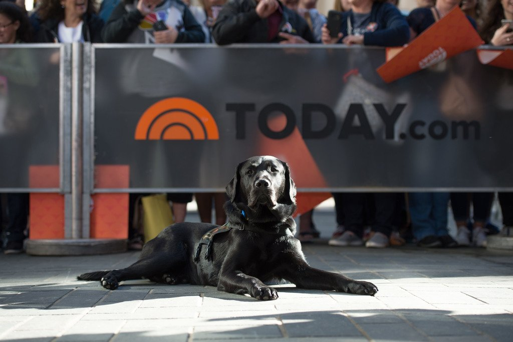 Soaking up the sun! #TODAYPuppy