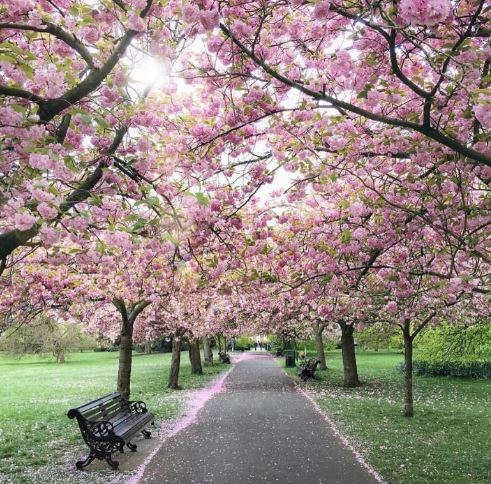 Why we love London so much...  #GreenwichPark #blossom #spring https://t.co/TXTWIEiXVq