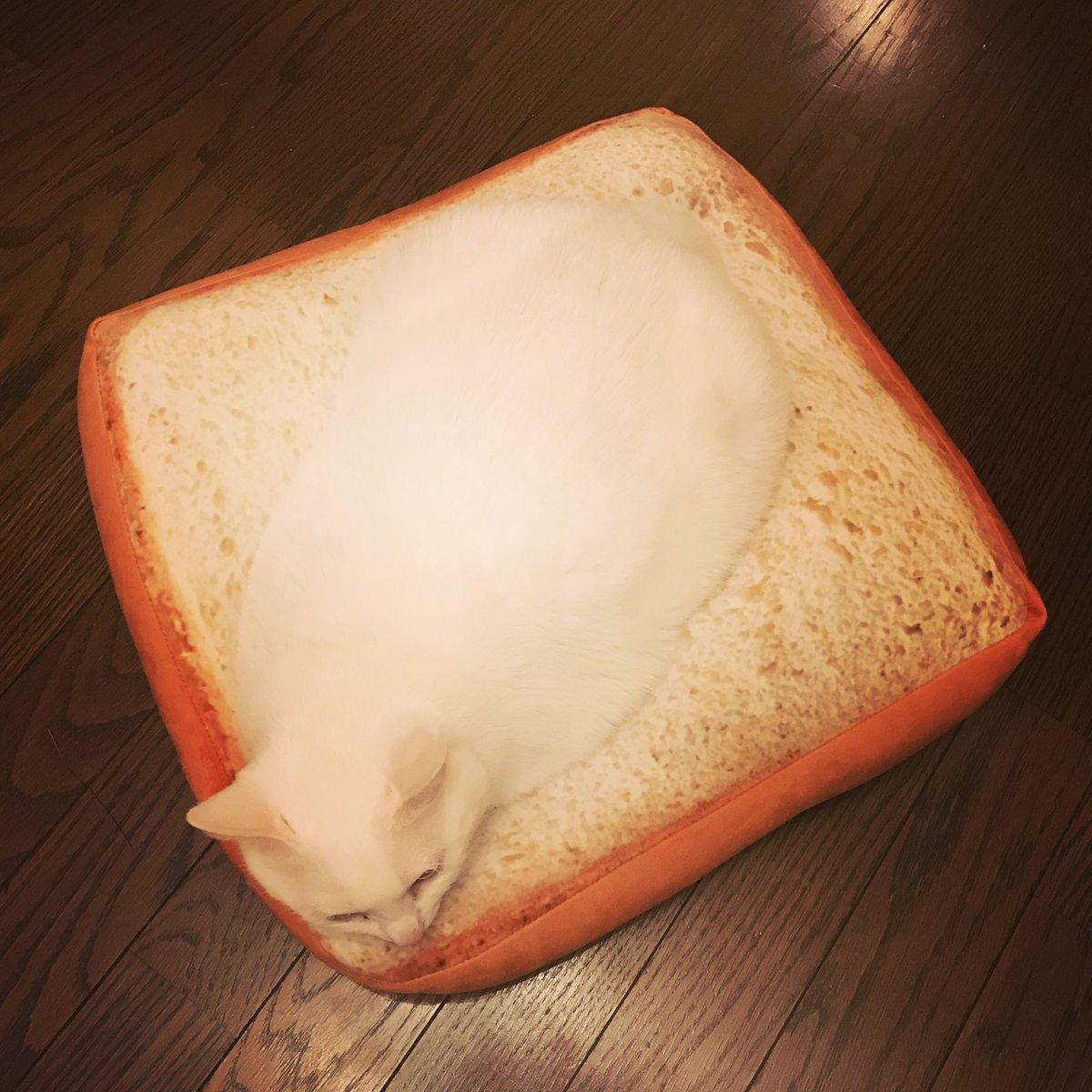 焼きたてふわふわの食パンに練乳クリームをのせたもの  ニトリのパンクッションです、気に入ったようで何よりです