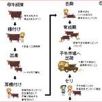 かわいくて分かりやすい!牛肉が食べられるようになるまでのドット絵が勉強になる!