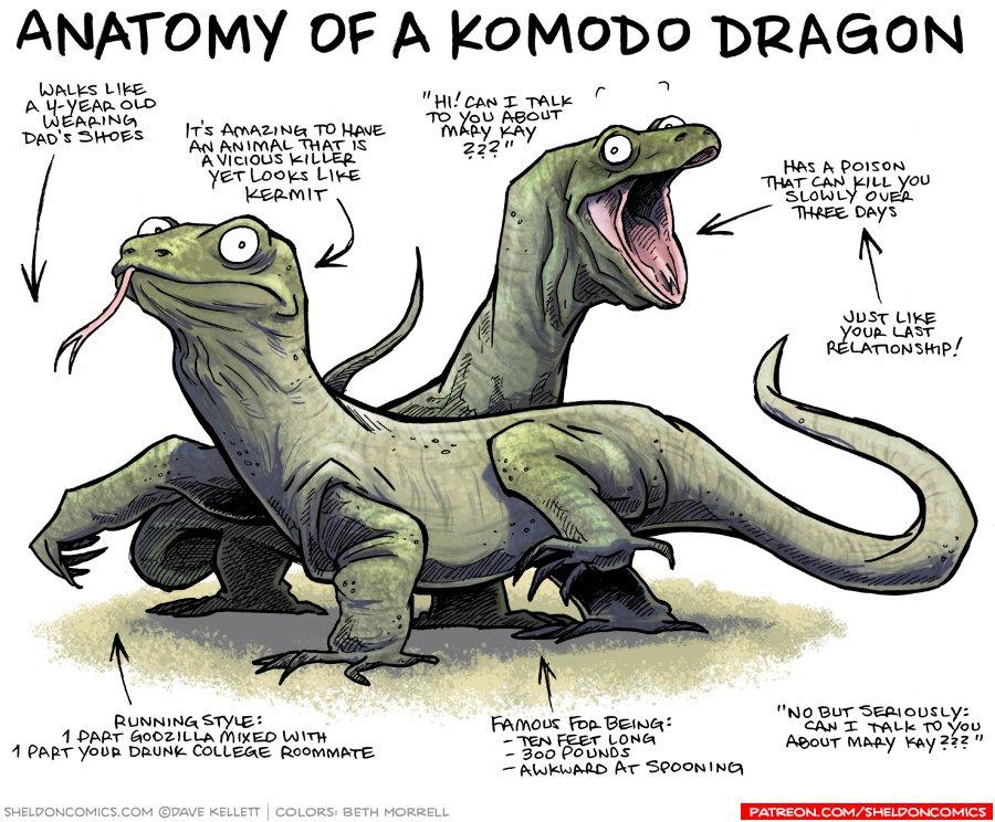 Dave Kellett On Twitter Anatomy Of A Komodo Dragon Httpst