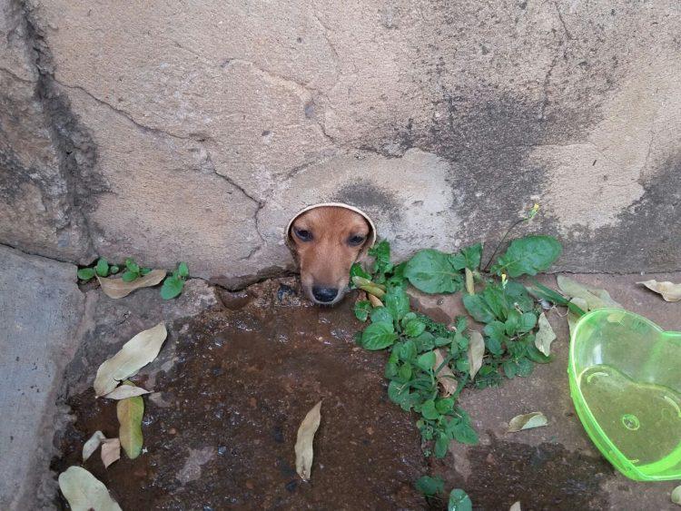Bombeiros resgatam cachorro preso em cano em Minas; veja https://t.co/xjPFNCGCrq