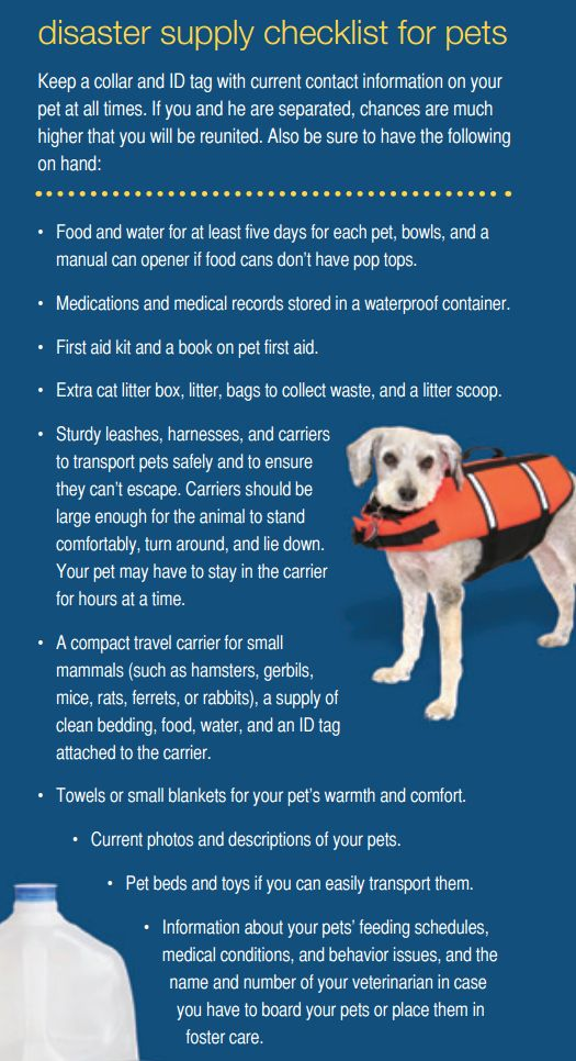 city of tyler texas on twitter pet safety during severe weather