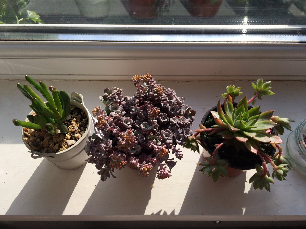 RT @WylderandWaite Today's happy acquisitions from @LoseleyPark  @SucculentsUk